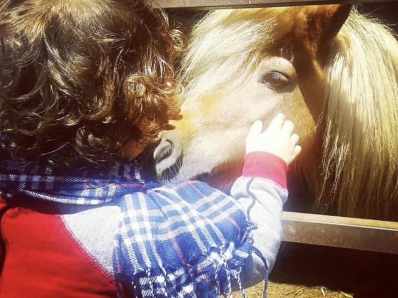 Pony - Animali della Tenuta Giarretta