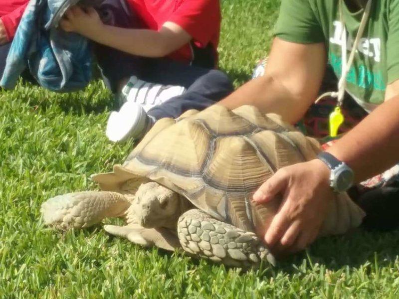 Tartaruga africana - Animali della Tenuta Giarretta